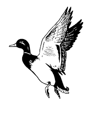 best hd flying duck clipart black and white mallard clip art