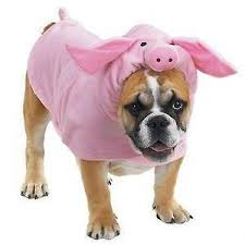 Halloween Costumes English Bulldogs Dog Halloween Costume Ebay