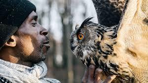 how falconry turned one man u0027s life right side up audubon