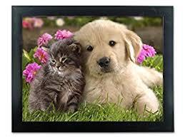amazon puppy kitten picture friends animal print