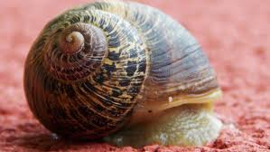 we should start breeding our own snails munchies