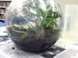 spc scholastica program rainforest terrarium