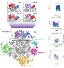 frontiers guardians of the gut u2013 murine intestinal macrophages