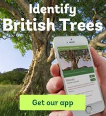 how to identify trees woodland trust
