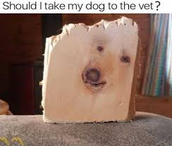 Vet Memes - dopl3r com memes should i take my dog to the vet