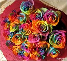 roses colors print page rainbow roses all colors in one