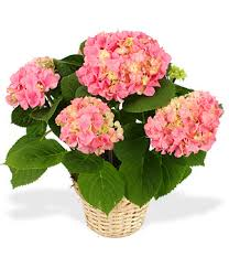 mothers day plants mothers day flowers and plants marshall florist kaukauna wi