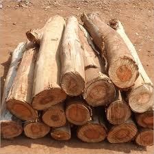 wood pictures timber wood log wood log indian timber industries