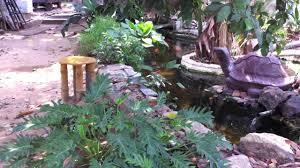 koi pond in india youtube