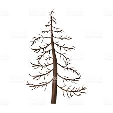 vector single cartoon brown bare pine tree stock vector art