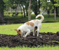 Can You Bury Animals In Your Backyard 4 Tips On How To Stop A Dog From Digging