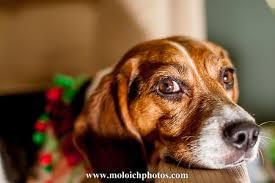 dog photo albums moloich photos family pet albums www moloichphotos