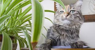 10 purifying houseplants that are safe for cats and dogs