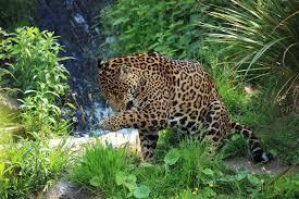 wild animals images Wild animals free stock photos download 6 487 free stock photos jpg