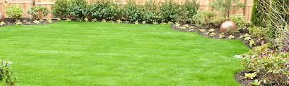 hints fall evergreen care u0026 tips