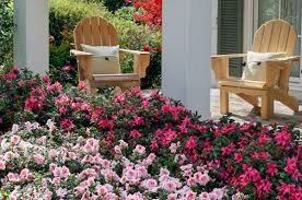 southern living u0026 encore azalea garden party bay area landscape