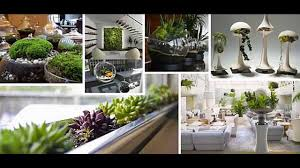 small indoor garden garden ideas