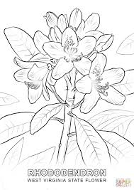 west virginia state flower coloring page free printable coloring