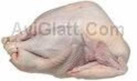 frozen whole turkey frozen fresh whole turkeys kosher turkey glatt kosher meat