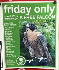 target call of duty black friday 146 best bird lady images on pinterest bird lady falcons and