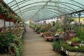outdoor plants bosworth u0027s garden centre
