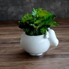 online shop new animal flower pots fleshy ceramic planter cute