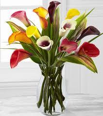 calla colors captured color calla bouquet flower co