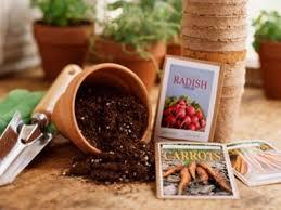 9 vegetables to grow indoors reader u0027s digest
