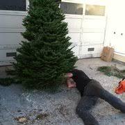 mountain mama u0027s christmas tree lot closed 24 reviews