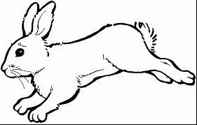 Good Rabbit Hopping Clip Art Black And White With Rabbit Coloring Rabbit Colouring Page