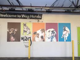 parker the pitbull mix wag hotel san francisco parker s mural at wag hotels san francisco