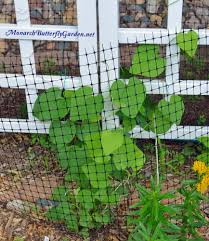 3 butterfly garden blunders don u0027t make these mistakes