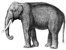 elephant printable design art u0026 printables pinterest