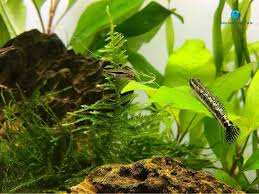 Aquascape Canada Aquascape Twitter Search