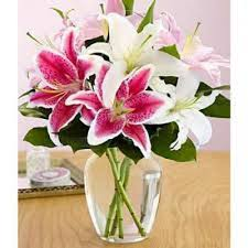 pink lillies pink white lilies