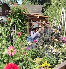 a woman walks through the lifespace gardens in west vancouver