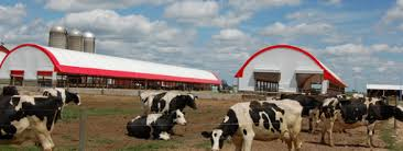 Livestock Barns Coverall Buildings Fabric Structures 300 U0027 Wide Steel Building