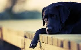 imagenes de triste porque mi amor esta malita mi perro está triste qué puedo hacer para ayudarle