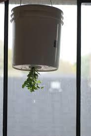upside down gardens growing chefs