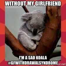 Sad Girlfriend Meme - without my girlfriend i m a sad koala gfwithdrawalsyndrome sad