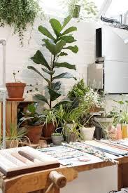 501 best indoor garden images on pinterest plants indoor plants