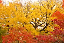 fall the best time to plant most trees shrubs stanley s