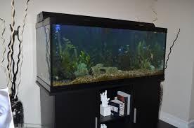 aquarium design exle our mission benjamin s aquarium services