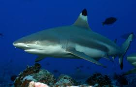 Florida Shark Attack Map Seventh Shark Bite Of 2014 Tracking Sharks