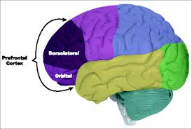 Anterior Association Area Appsychtextbk Cerebral Cortex