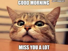 Cat Lover Meme - 40 good morning wishes for cat lovers images pictures happy
