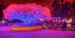 Zoo Lights Phoenix Zoos Light Up The Holiday Season Holiday Zoolight Celebrations