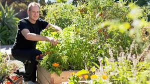 how to start a raised bed veggie garden sunset
