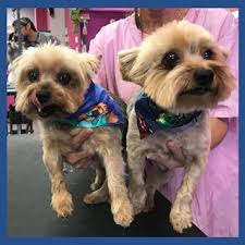 laura u0027s doggie doo u0027s u2013 affordable dog grooming in austin texas