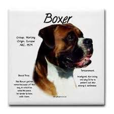 boxer dog jokes boxer dog quotes profile picture quotes